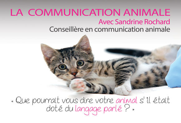 COMMUNICATION ANIMALE – Communication médiumnique avec les animaux